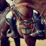 雨の名勝負~競馬篇①「キセキを呼ぶ天災」 2010年 優駿牝馬(オークス)